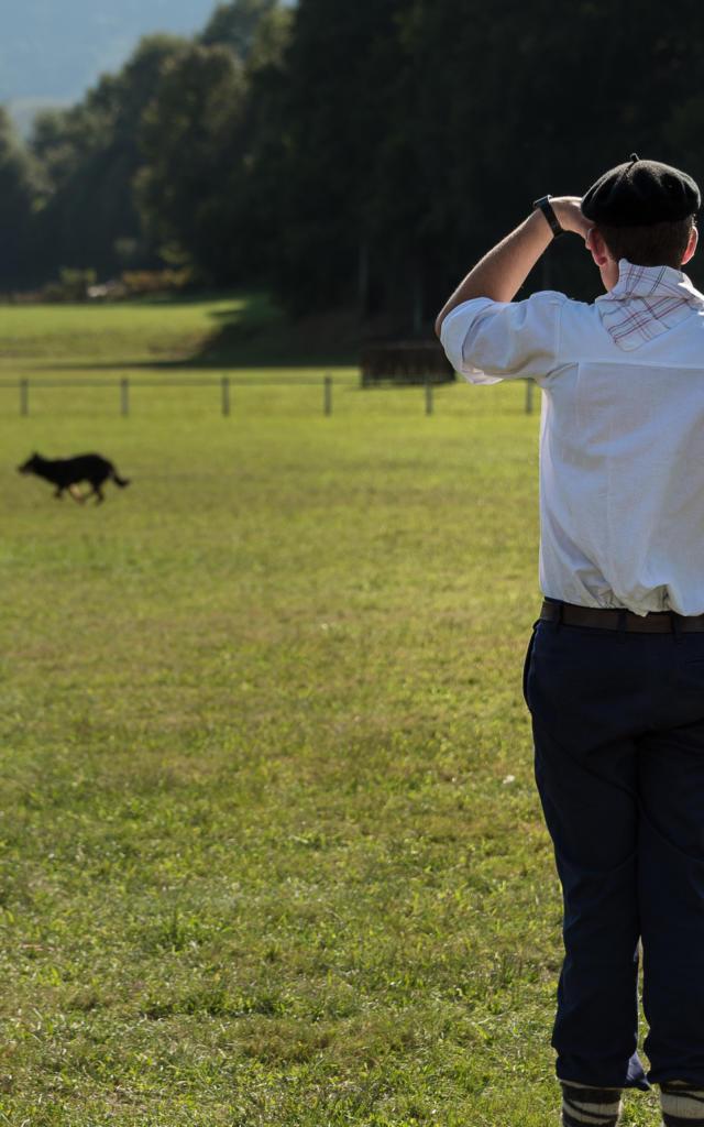 Pastor dirige su rebaño con su perro pastor en la Fiesta de los Pastores de Aramits