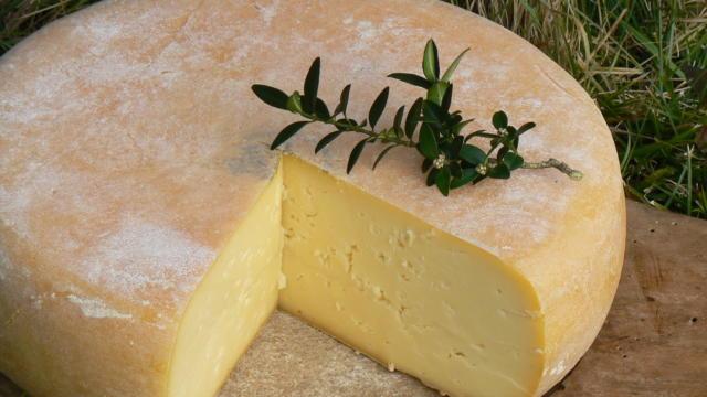 Tomme de fromage de brebis coupée