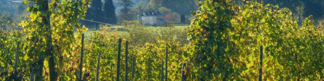 Vue sur les vignobles du Jurançon avec une demeure traditionnelle béarnaise en fond
