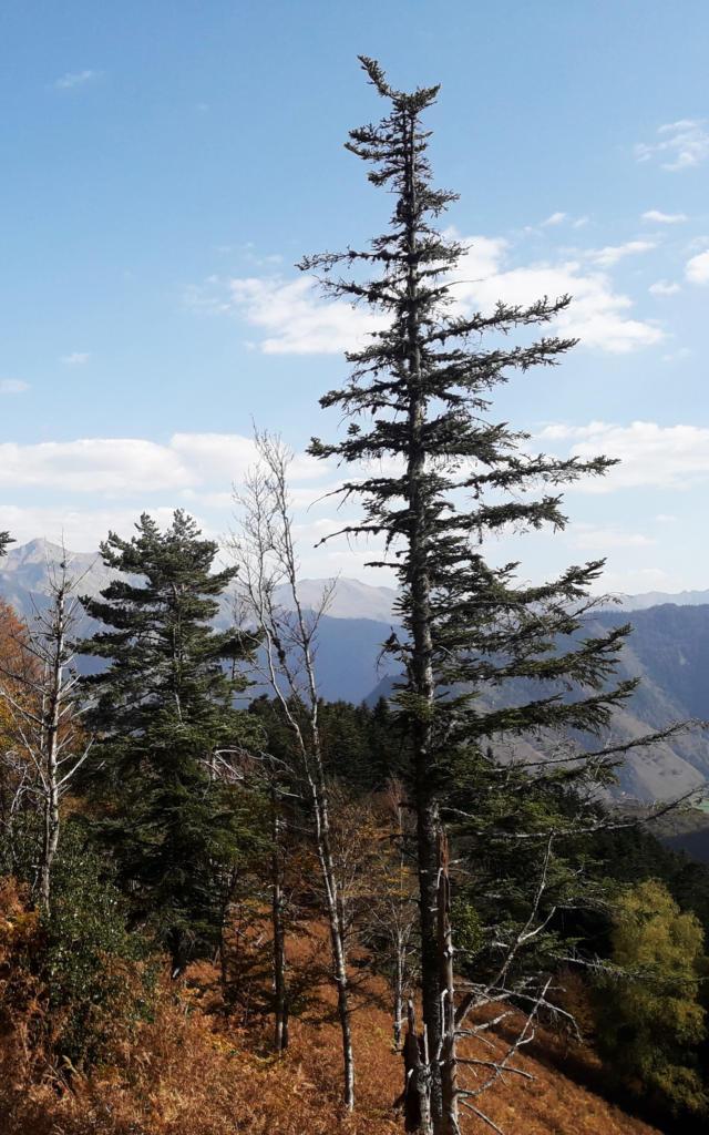 Vue depuis la forêt sur la randonnée de la Cabane de Boué en Vallée d'Aspe