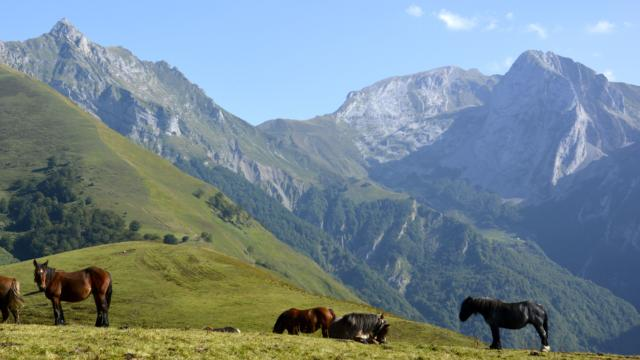 Chevaux en Pyrénées béarnaises