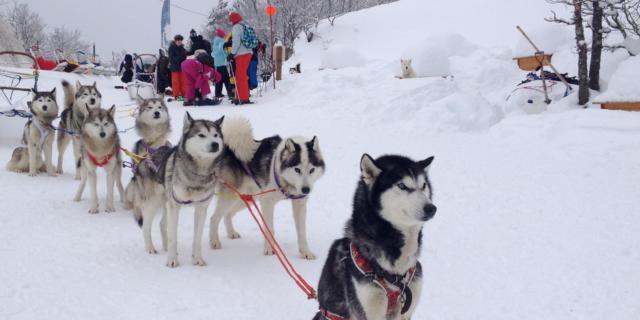 journe-trappeurs-chiens.jpg